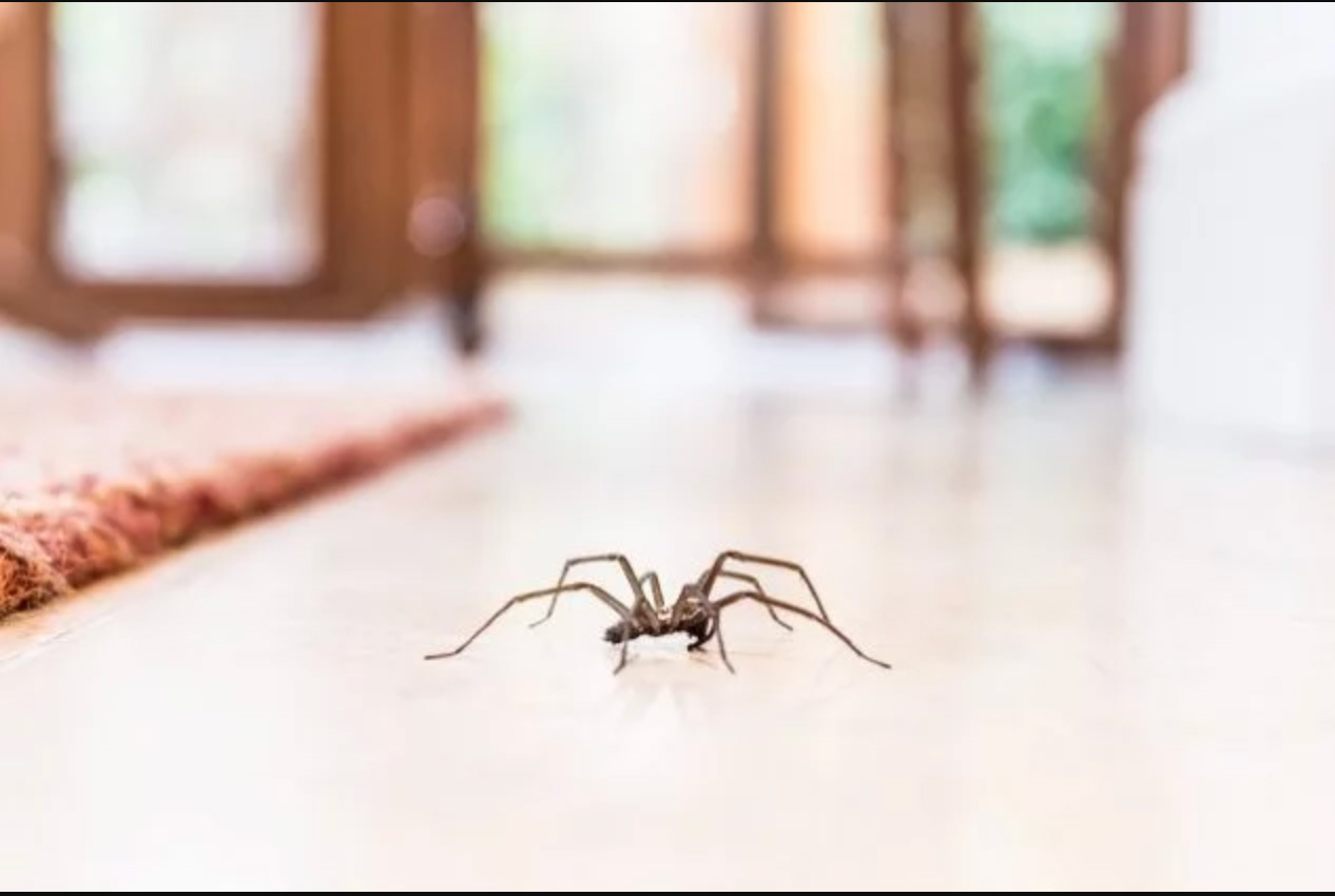Spider-on-floor